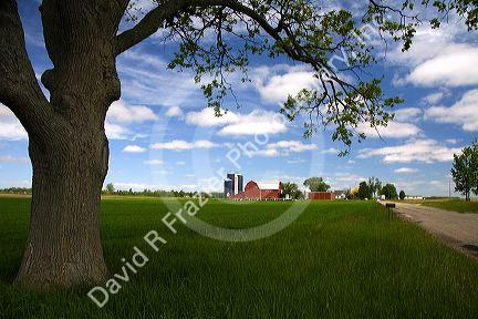 Farm surrounded by green unripe wheat at St. Louis, Michigan.