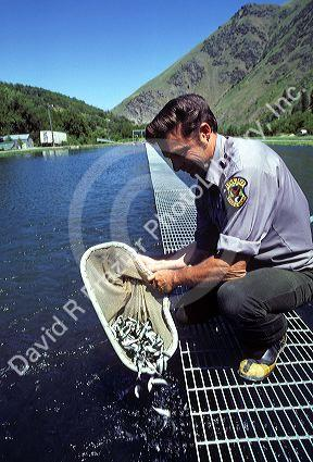 Idaho department of fish and game officer examines chinook for Fish and game office near me