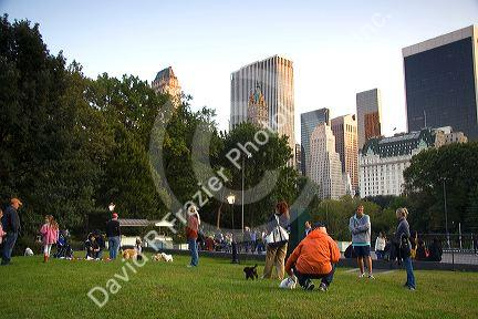 Dog owners socialize in Central Park, Manhattan, New York City, New York, USA.
