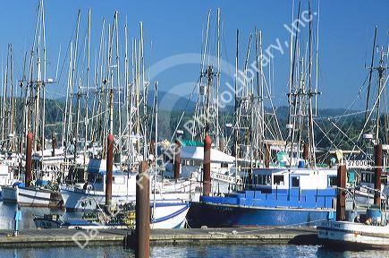 Fishing boats docked in newport oregon david r for Newport oregon fishing