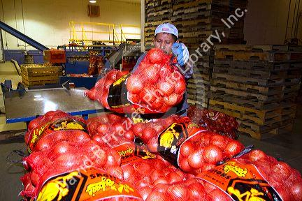 Worker moves packaged onions in Nyssa, Oregon, USA.