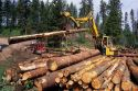 Timber harvest in the Boise National Forest, Idaho.