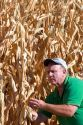 A farmer looking at feed corn in Canyon County, Idaho. MR