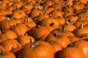 A display of pumpkins in the city of Concord, New Hampshire, USA.