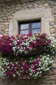 Window box with flowers in the town of Potes, Liebana, Cantabria, northwestern Spain.