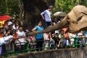 Visitors feed sugar cane to an asian elephant at the Saigon Zoo and Botanical Gardens in Ho Chi Minh City, Vietnam.