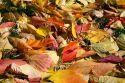 Colorful autumn leaves on the ground in Boise, Idaho, USA.
